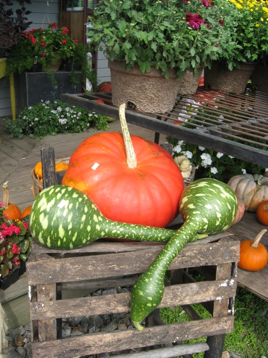 Snake gourds and pumpkin
